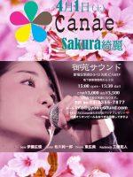 170401_Canae Sakura綺麗